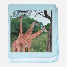 three giraffes baby blanket