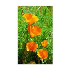 California Poppies Decal