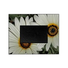 Large Daisies Picture Frame