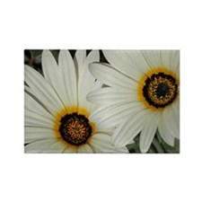 Large Daisies Rectangle Magnet