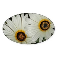Large Daisies Decal