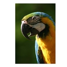 Blue and gold macaw #2 Postcards (Package of 8)
