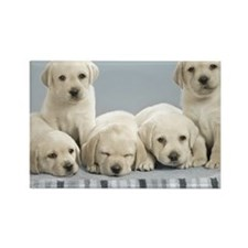 cute_puppies-normal Rectangle Magnet