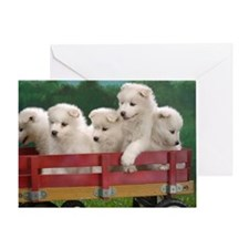 wagonload_of_samoyed_puppies-wide Greeting Card
