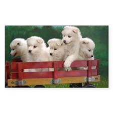 wagonload_of_samoyed_puppies-w Decal