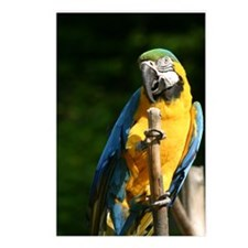 Blue and gold macaw #3 Postcards (Package of 8)