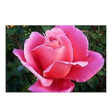 Pink Ballet Skirts Rose Postcards (Package of 8)