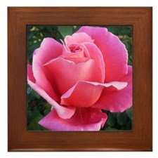 Pink Ballet Skirts Rose Framed Tile
