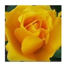 Yellow Rose Full Bloom A Tile Coaster