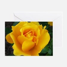Yellow Rose Full Bloom A Greeting Card