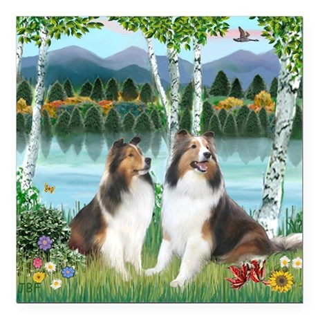 """Birches - 2 Shelties - s Square Car Magnet 3"""" x 3"""""""