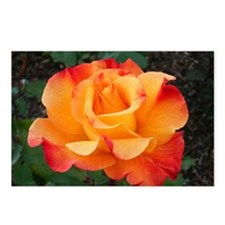 Orange Red Rose Postcards (Package of 8)