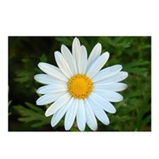 White Daisy Postcards (Package of 8)