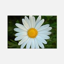 White Daisy Rectangle Magnet