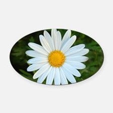 White Daisy Oval Car Magnet