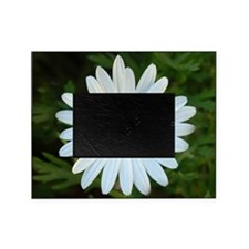 White Daisy Picture Frame