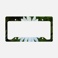 White Daisy License Plate Holder