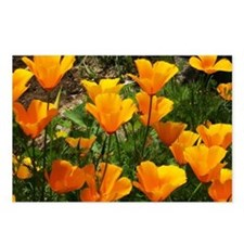 Flock of Buttercups A Postcards (Package of 8)