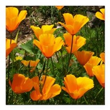 "Flock of Buttercups A Square Car Magnet 3"" x 3"""