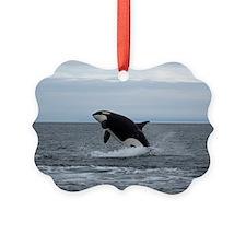 IMG_2447 Ornament