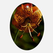 LILYSIGGBOTTLE Oval Ornament
