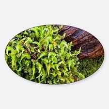 Moss--Wood1-4-5-10-7706 Sticker (Oval)