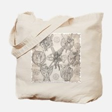 7Angels10x10 Tote Bag