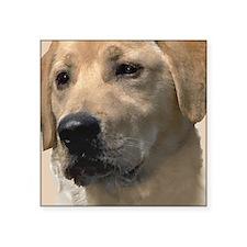 """Yellow Labrador Retriever Square Sticker 3"""" x 3"""""""
