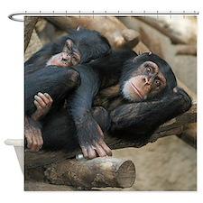 Chimpanzee006 Shower Curtain