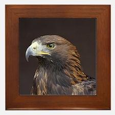 Eagle003 Framed Tile