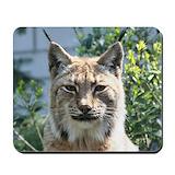 Big cat photos Classic Mousepad