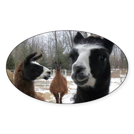 Llamas larger Sticker (Oval)