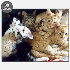 FosterKittens Puzzle