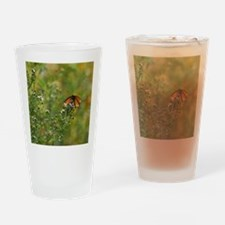 Viceroy Butterfly Drinking Glass