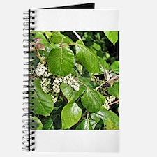 Poison Ivy Flower Journal
