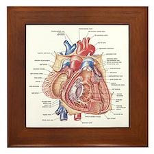 Heart anatomy Framed Tile
