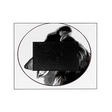 2-collieheadfordark Picture Frame