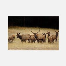 Elk 9x12 Rectangle Magnet