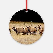 Elk 9x12 Round Ornament