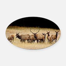 Elk 9x12 Oval Car Magnet