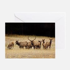 Elk 9x12 Greeting Card