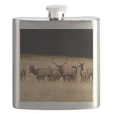 Elk 9x12 Flask