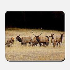 Elk 9x12 Mousepad