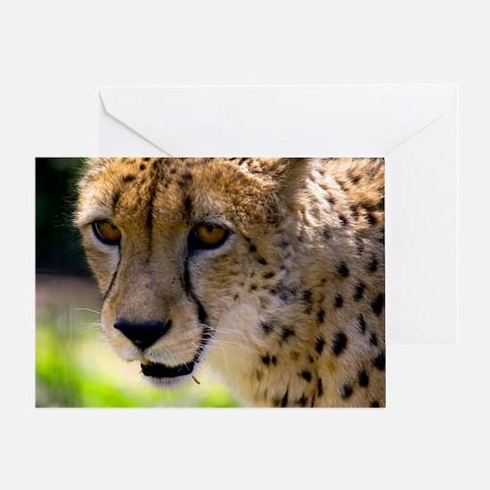 (2) Cheetah 9120 Greeting Card