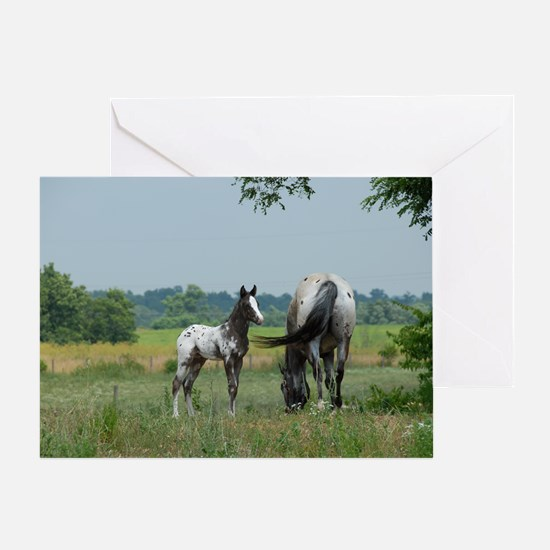 Amigo and Faith, Palisades Appaloosa Greeting Card