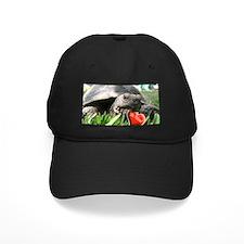 Helaine's Desert Tortoise Val Baseball Hat