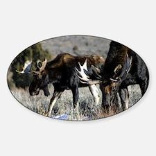bull moose Decal