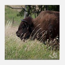 Buffalo I Tile Coaster