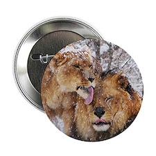 "winter lions 2.25"" Button"