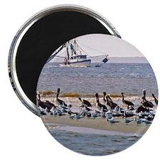 Pelican/Shrimp Boad Magnet